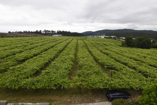 Viñas Granbazán